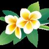 プルメリアの造花